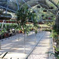 Устройство секции орхидей Мексики