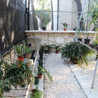 Папоротники, орхидеи и бромелии Мексики