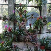 Композиция из криптантусов, бромелий и орхидей Мексики