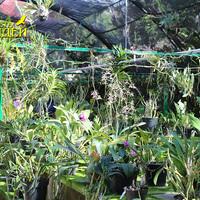 Пышное цветение орхидей в парке Шкарет