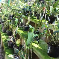 Большая часть орхидей расположена на лавках