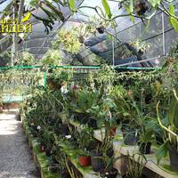 Большинство орхидей взрослые и разросшиеся растения
