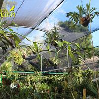 Верхний ярус в орхидариуме парка Шкарет