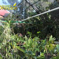 Посетители орхидариума -орхидеи Мексики парка Шкарет