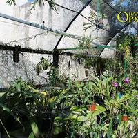 Орхидеи Мексики в парке Шкарет