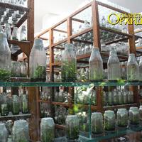 Сеянцы орхидей в отделе