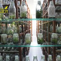 Искусственная подсветка отсутствует среди стеллажей с сеянцами орхидей