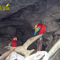 Попугаи ара жители пещеры на берегу ручья