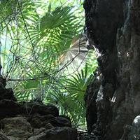 Одна из пещер, вход в которую прикрыт листьями пальмы