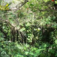 Густые тропические заросли рядом с водоёмом