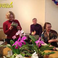 Осмотр Kingidium decumbens, выросшего из сеянца и цветущего в канистре