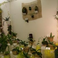 растения на блоках