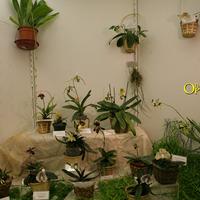 экспозиция с растениями
