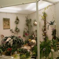 бромелиевые и орхидеи