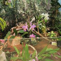 Витрина Владимира Маркина на выставке «Путешествие к орхидеям 2015»