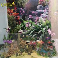 Витрина с насекомоядными растениями и орхидеями