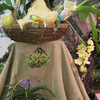 Композиция из орхидей и Тилландсий на выставке «Путешествие к орхидеям 2015»