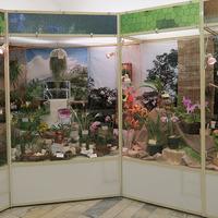 Витрина Ольги Изотовой на выставке «Путешествие к орхидеям 2015»