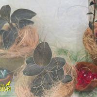 Драгоценные орхидеи из коллекции Ольги Изотовой