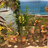 Орхидеи на морском берегу