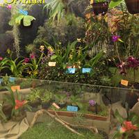 Витрина с орхидеями Владимира Чекмарева