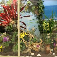 уголок орхидей и бромелий