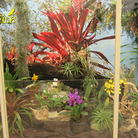Бромелии на экспозиции «Планета Орхидей»