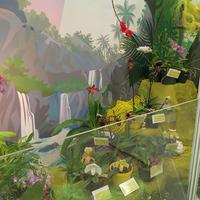 Сказка и орхидеи Сергея Беляева