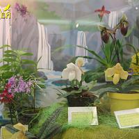 Paphiopedilum и Epidendrum Сергея Беляева у водопада