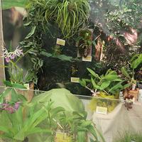 Орхидеи Владимира Маркина на выставке «Путешествие к орхидеям 2015»