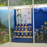 Икусно оформленная витрина Ларисы Клюевой с Дендробиумами, выращиваемыми по канонам японского искусства