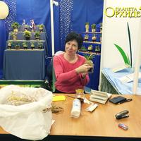 Лариса Клюева за оформлением витрин со своими растениями