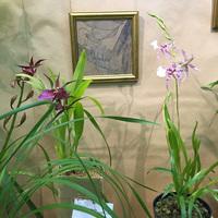 Витрина Главного Ботаническог сада. Выращивание орхидей в синтетическом материале