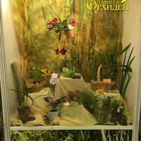 Общий вид витрины с орхидеями отдельных коллекционеров