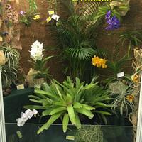 Витрина с орхидеями отдельных коллекционеров