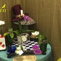 Витрина «Орхидеи Фаленопсис в стране чудес»