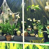 Стенд Интернет проекта Пассифлора со многими видовыми растениями