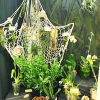 Общий вид витрины Интернет проекта «Пассифлора» с видовыми орхидеями
