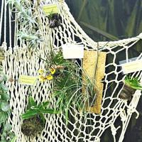 Миниатюрные орхидеи на блоках