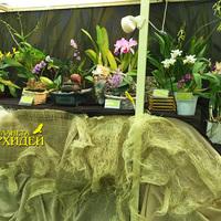 Общий вид витрины орхидей отдельных коллекционеров
