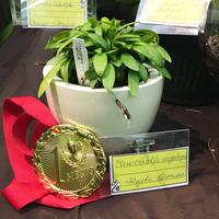 Pleurothallis megalops Татьяны Лебедевой, получивший первое место в номинации на «Лучшую видовую миниатюру»