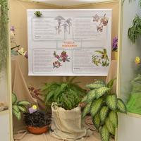 плакат про особенностиопыления орхидных
