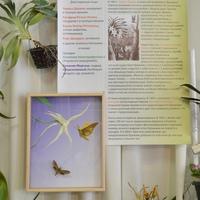 Стенд с историей открытия бражника по цветку ангрекума полуторафутового Angraecum sesquipedale