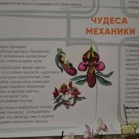 Мы подготовили плакаты про некоторые стратегии опыления у орхидных