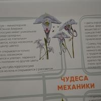 Автор чудесных рисунков - Олег Добровольский