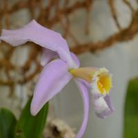 На стендах выставки было представлено около 300 орхидей