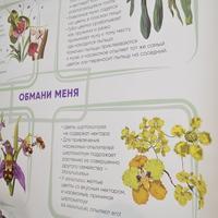 Орхидеи - великие обманщики своих опылителей!