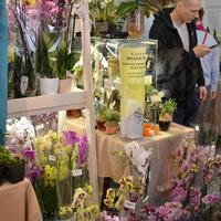 Компания JMP-Flowers привезла свои прекрасные фаленопсисы для продажи.