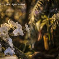 Белоснежные Фаленопсис среди деревьев