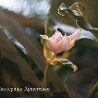 Фестиваль орхидей -  Мединилла